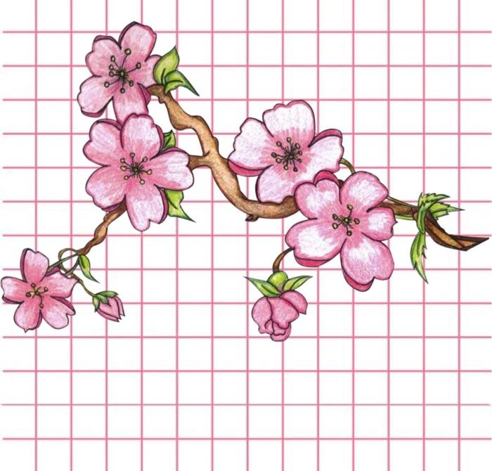 رسومات زهرة جميلة - مائتين صورة للرسم
