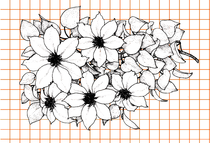 flowers-drawing-image-120