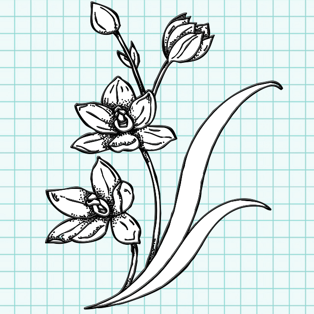 flowers-drawing-image-121