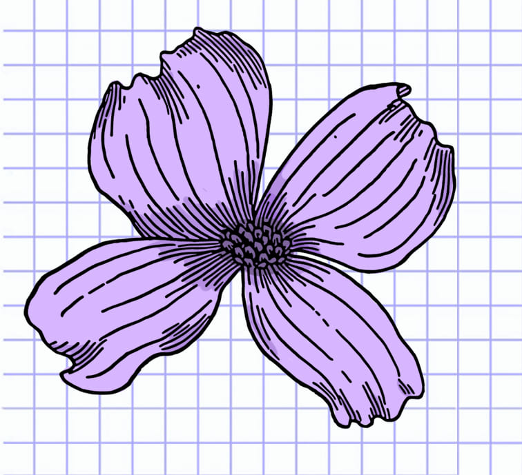 flowers-drawing-image-13