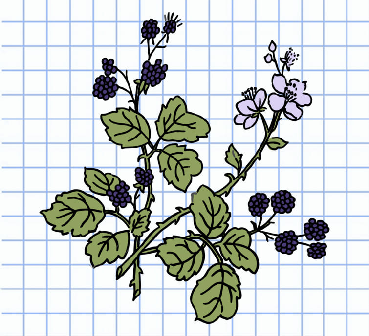 flowers-drawing-image-19
