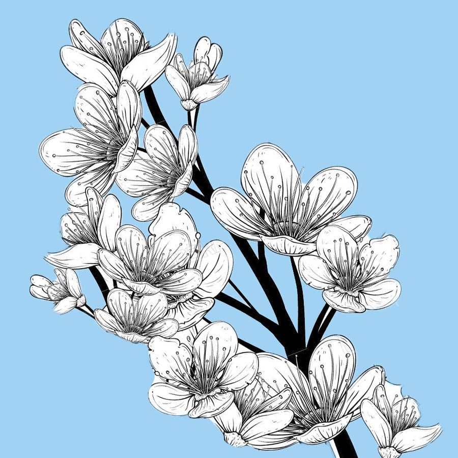 flowers-drawing-image-2-17