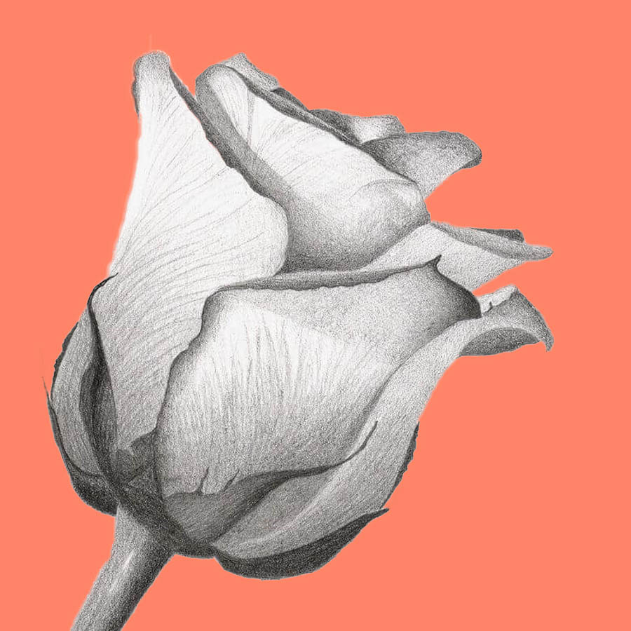 flowers-drawing-image-2-23