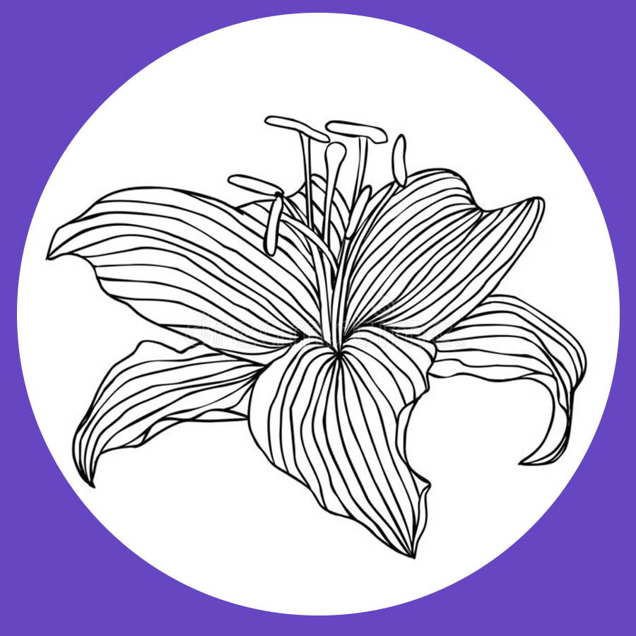 flowers-drawing-image-2-32