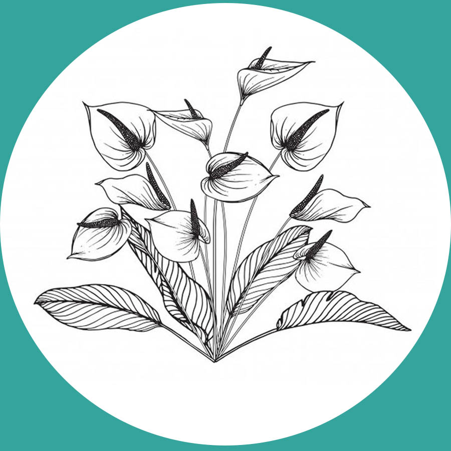 flowers-drawing-image-2-42
