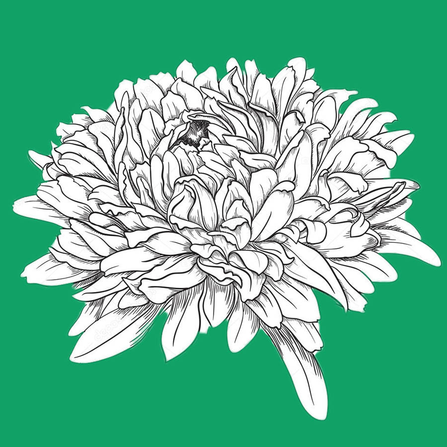 flowers-drawing-image-2-44