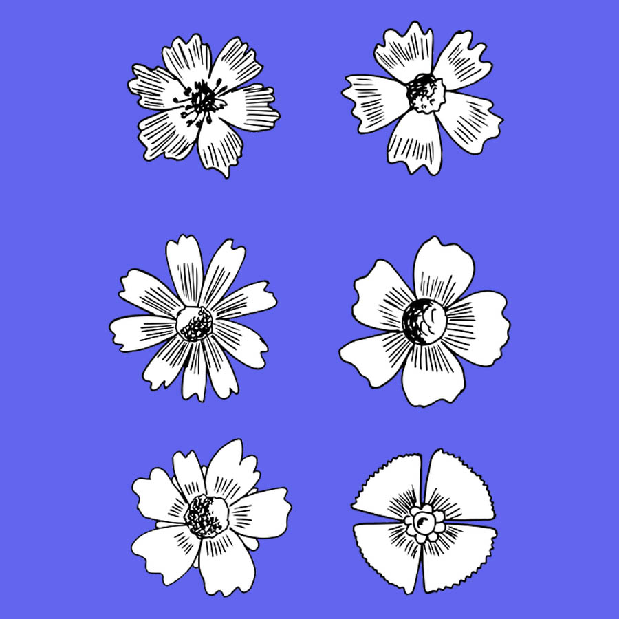 flowers-drawing-image-2-46