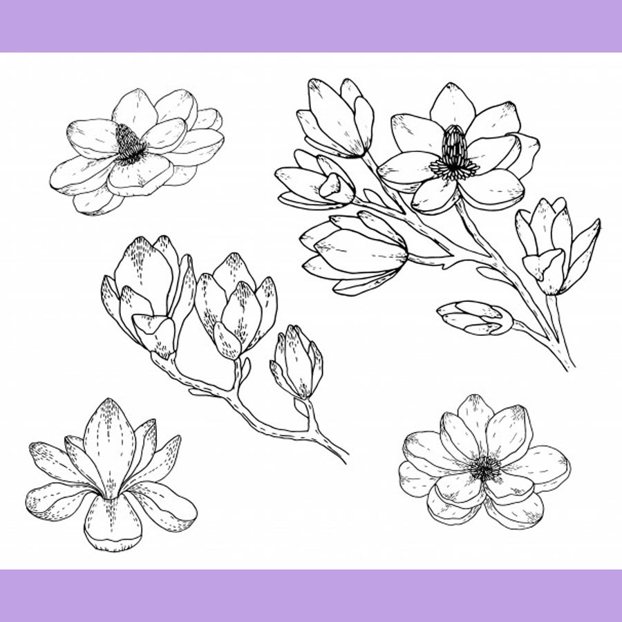 flowers-drawing-image-2-53