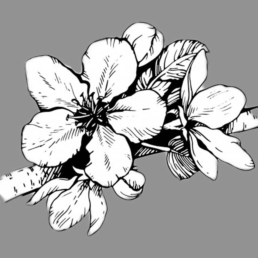 flowers-drawing-image-2-68