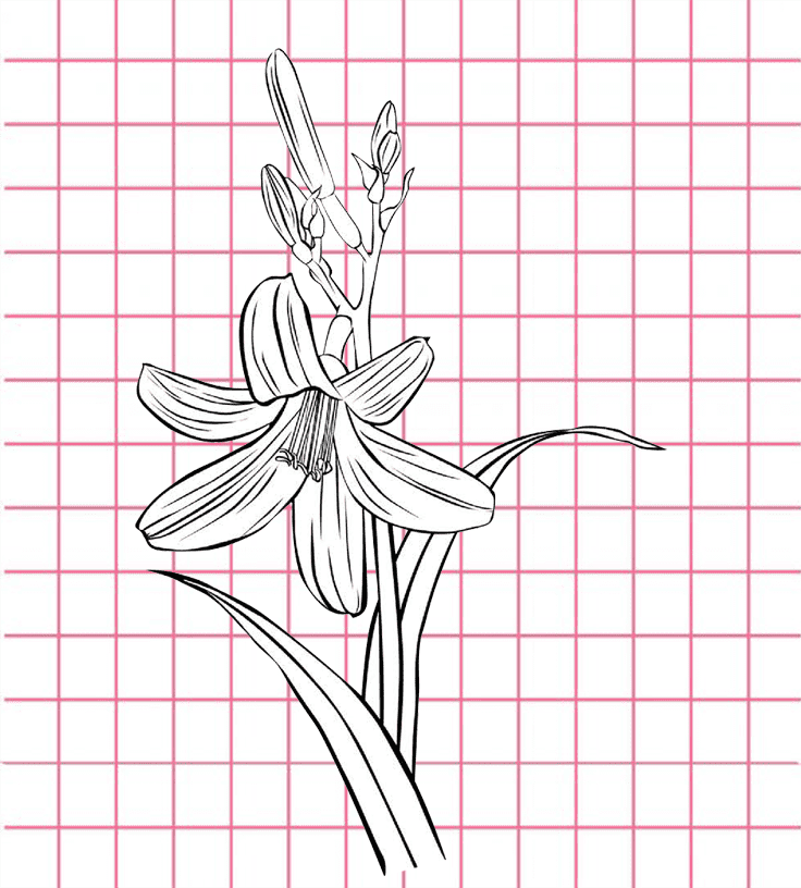 flowers-drawing-image-2
