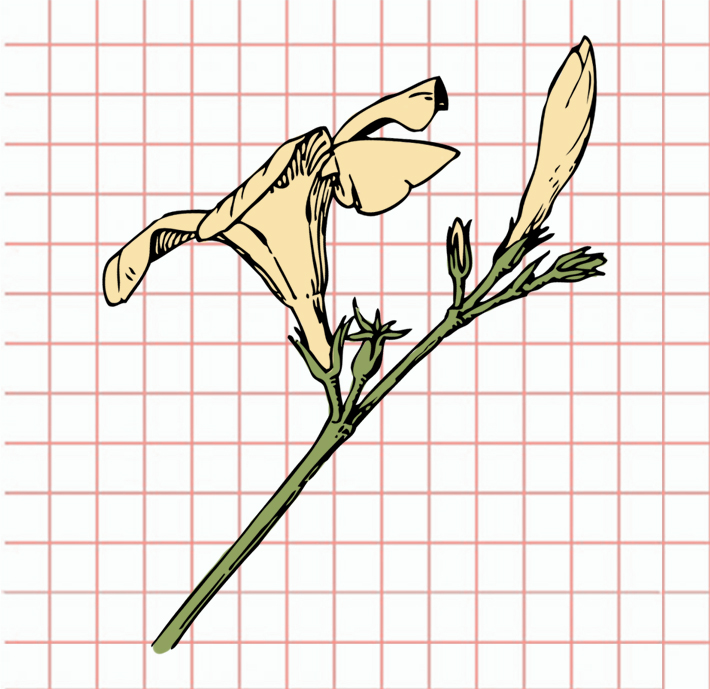flowers-drawing-image-22