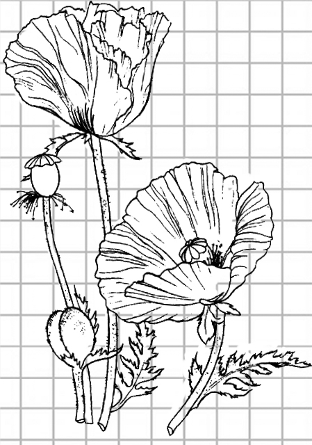 flowers-drawing-image-27
