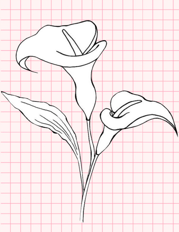 flowers-drawing-image-32