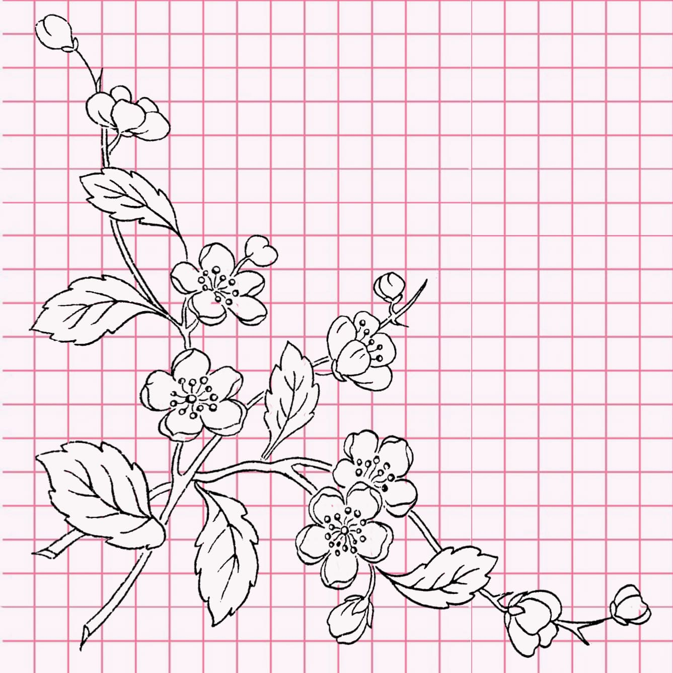 flowers-drawing-image-40
