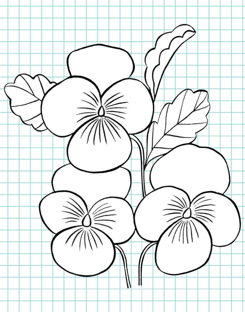 flowers-drawing-image-50