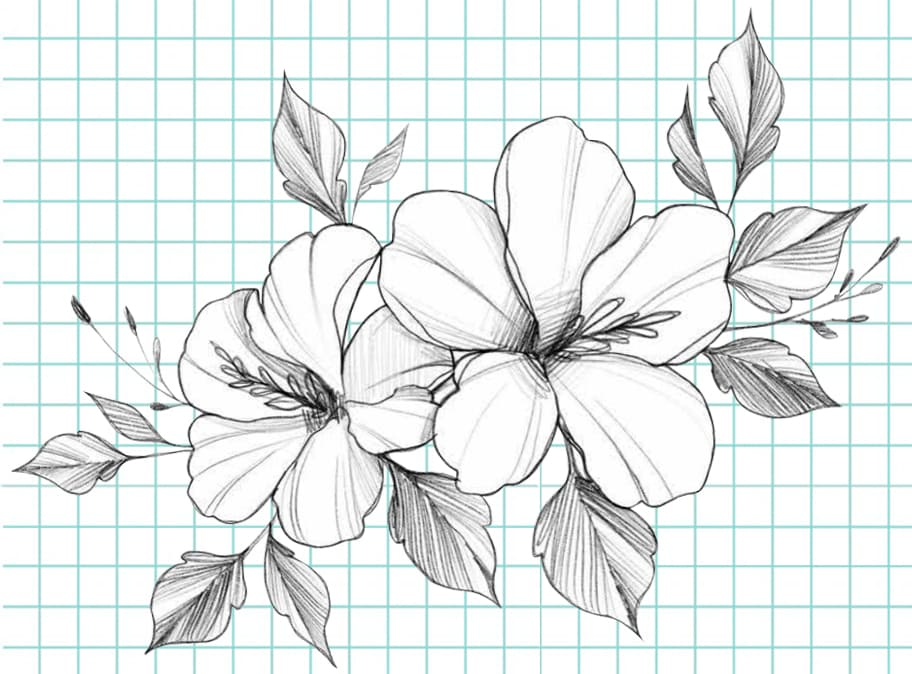 flowers-drawing-image-51