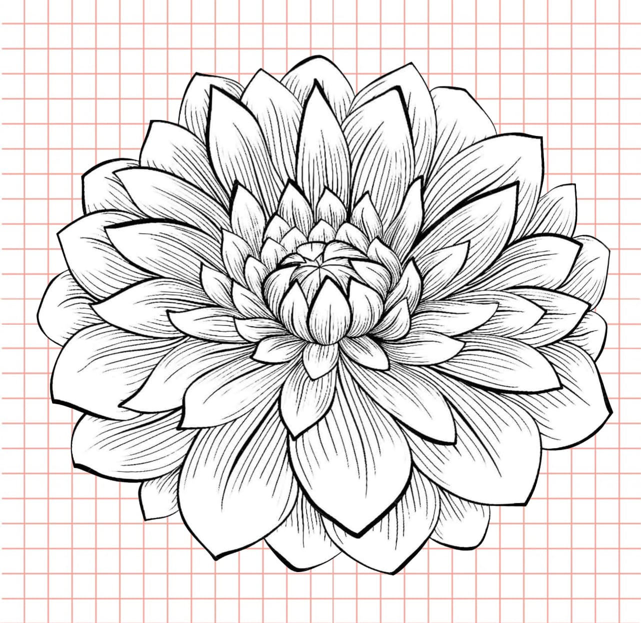 flowers-drawing-image-52