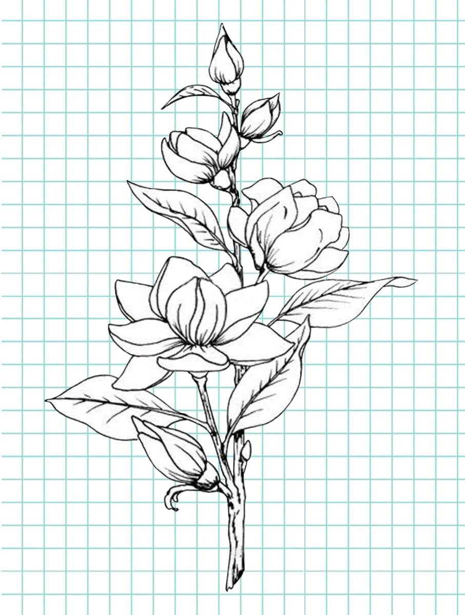 flowers-drawing-image-54