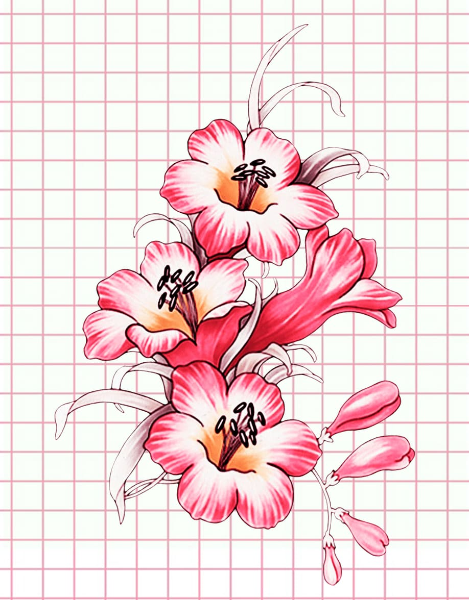 flowers-drawing-image-55