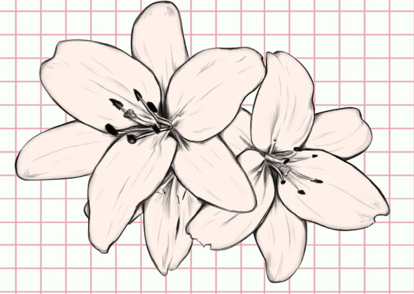 flowers-drawing-image-56