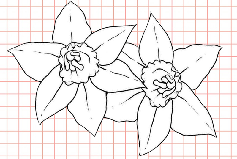 flowers-drawing-image-57