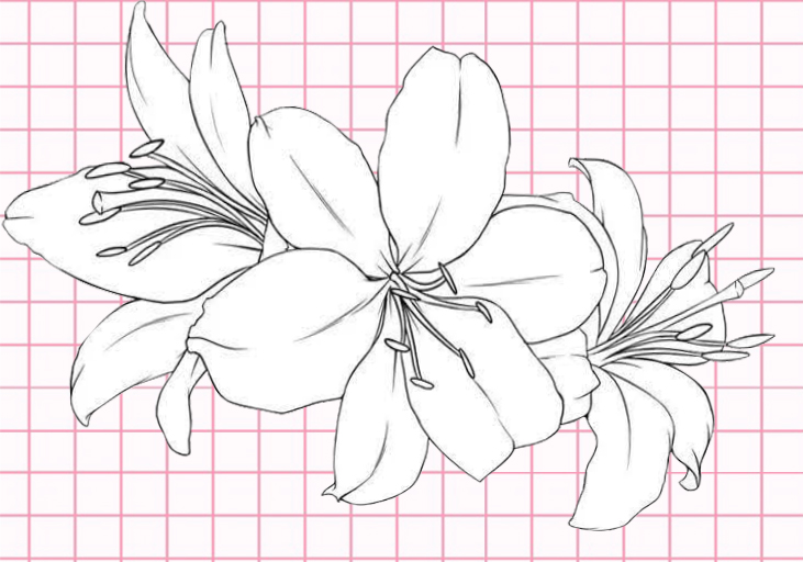 flowers-drawing-image-62