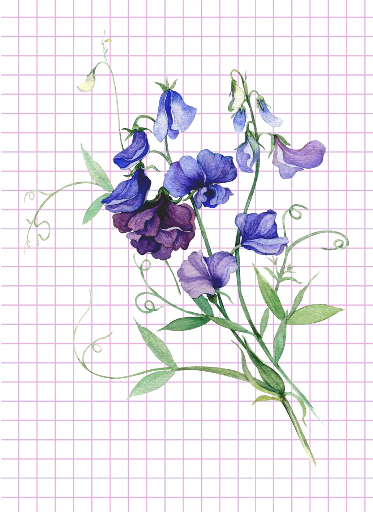 flowers-drawing-image-69