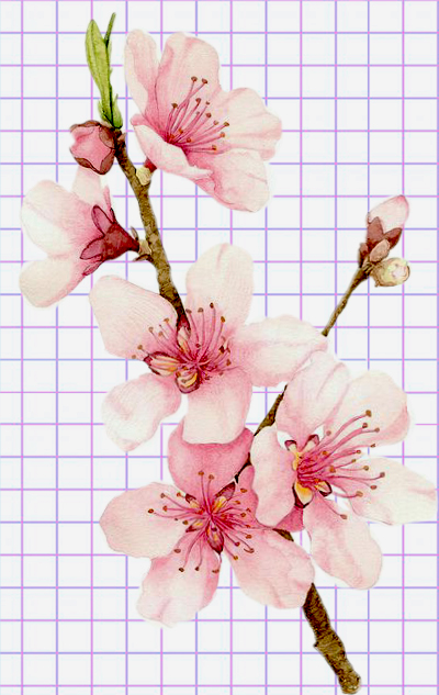flowers-drawing-image-75
