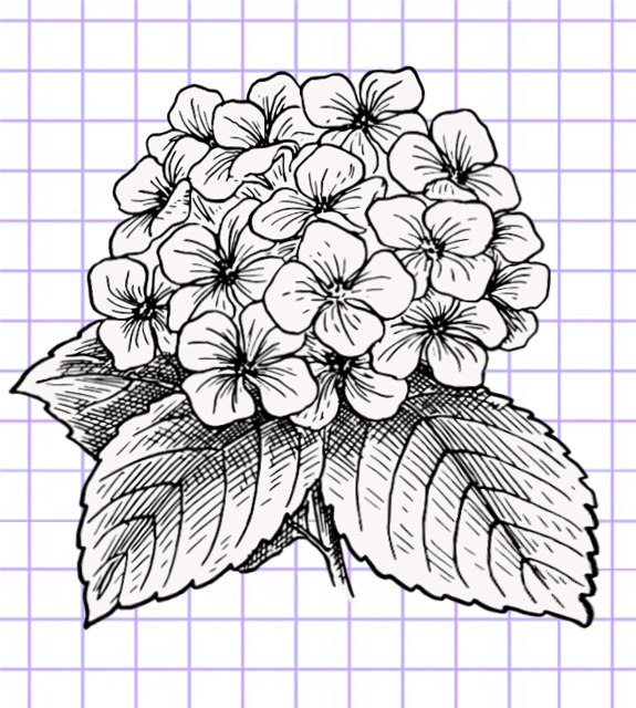 flowers-drawing-image-77