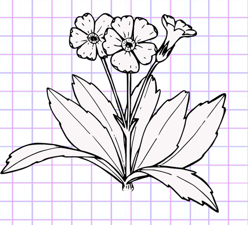 flowers-drawing-image-83