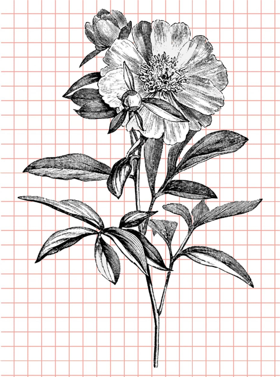 flowers-drawing-image-85