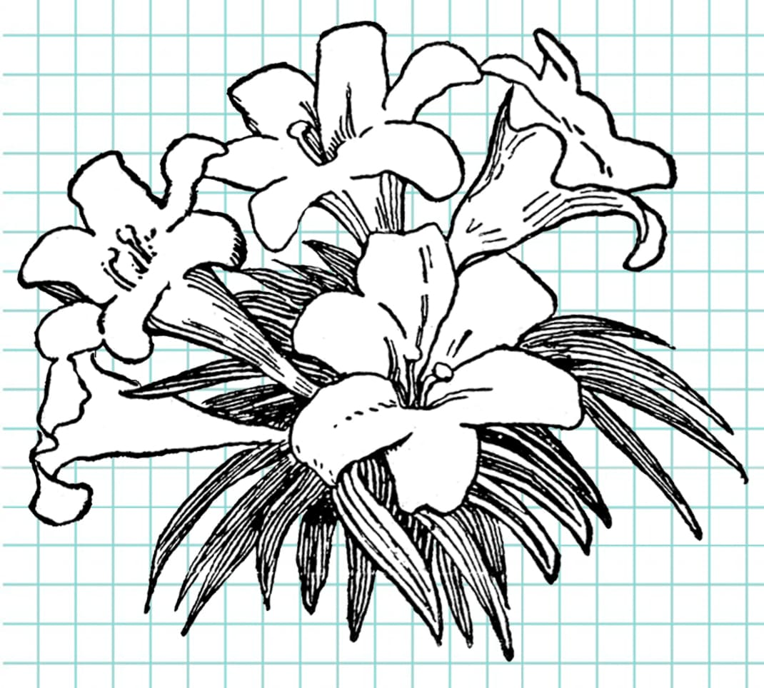 flowers-drawing-image-89