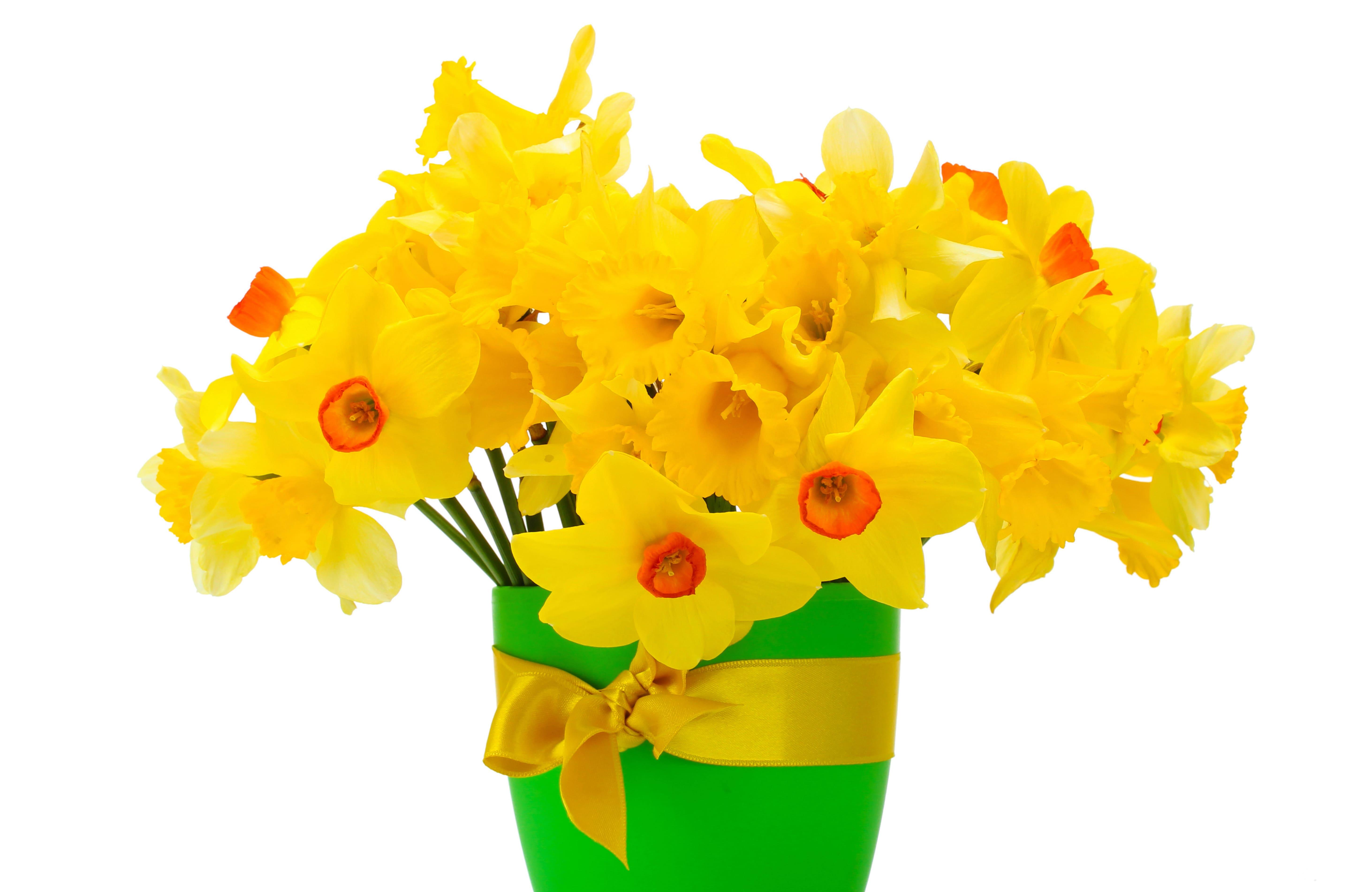 daffodils-photo-16