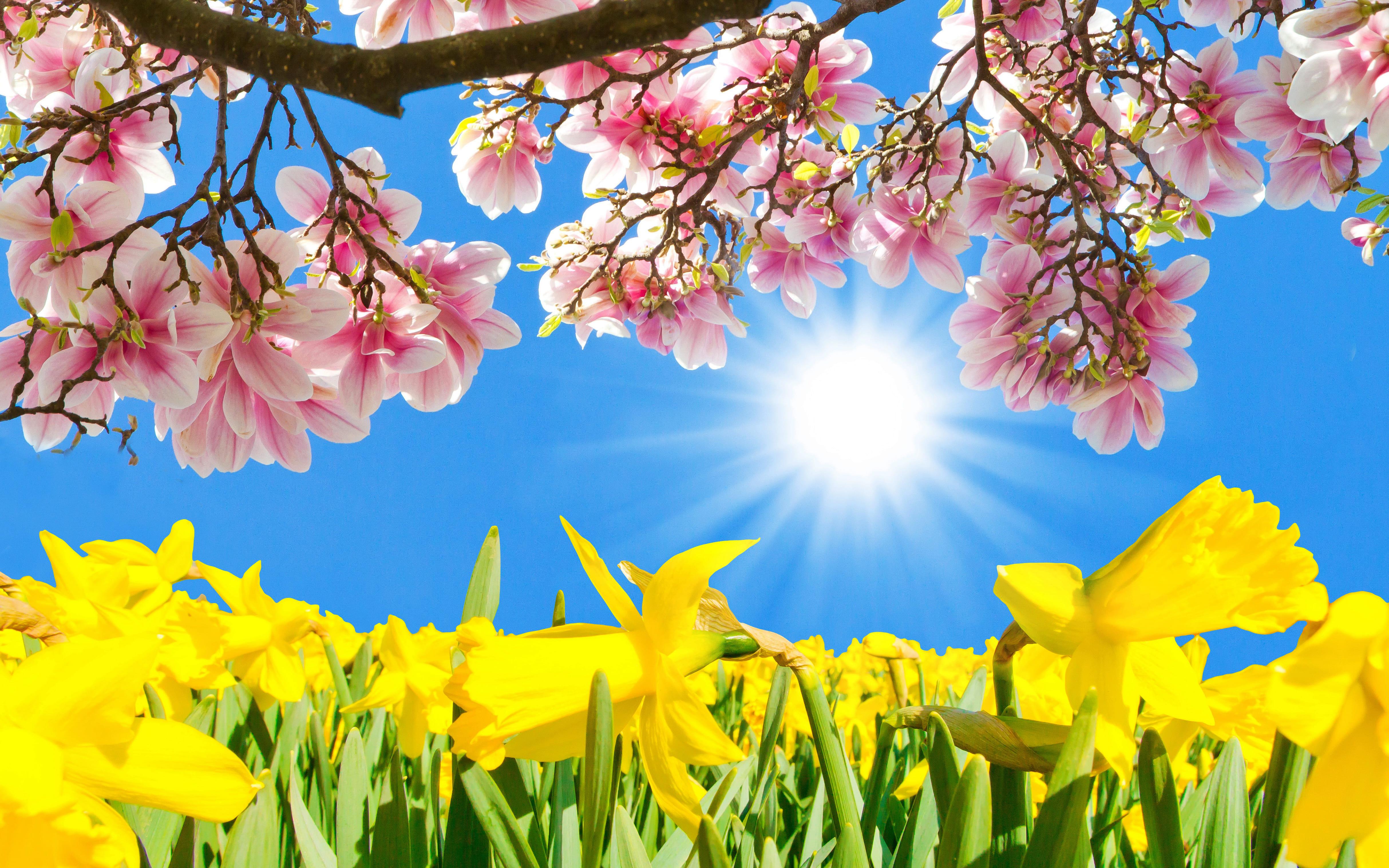 daffodils-photo-17
