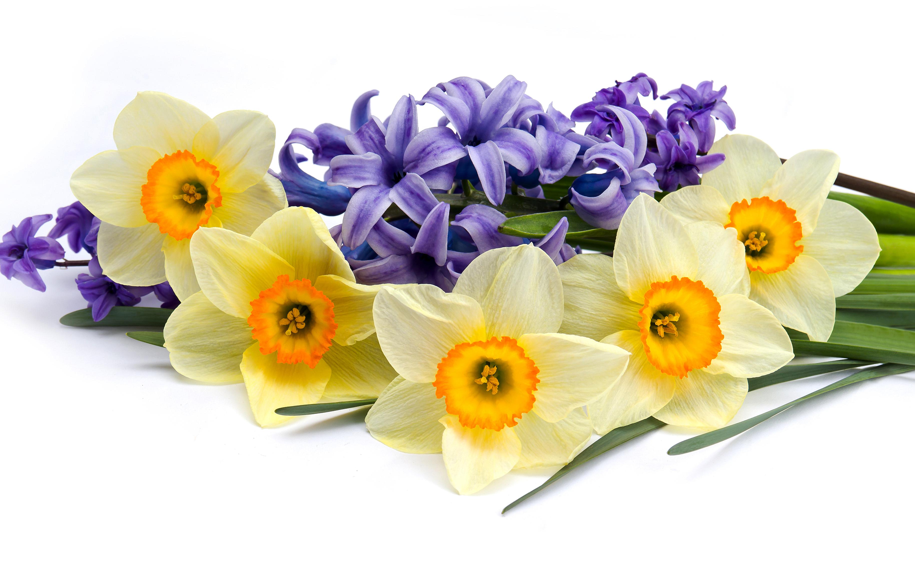 daffodils-photo-19