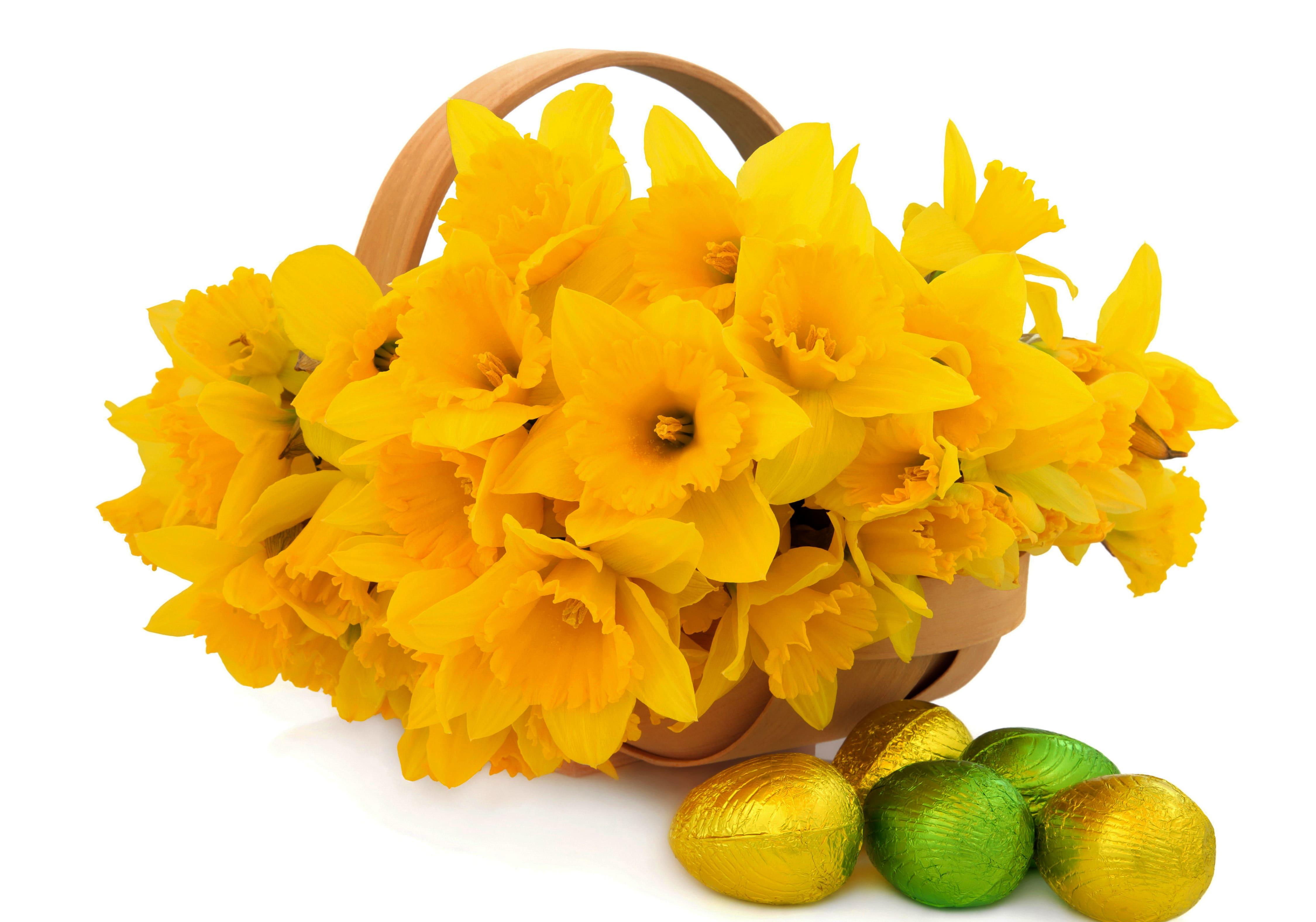 daffodils-photo-20
