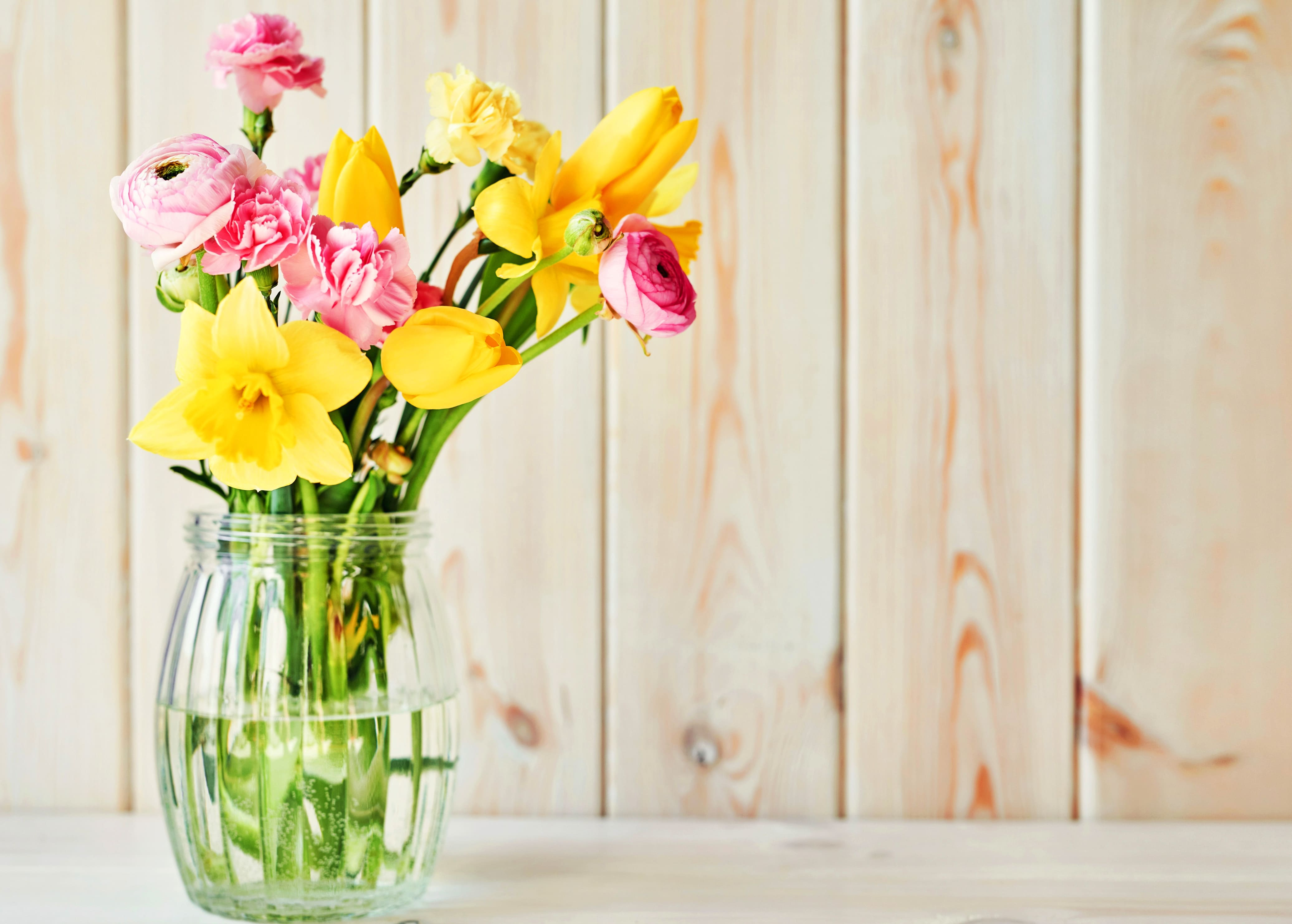 daffodils-photo-28