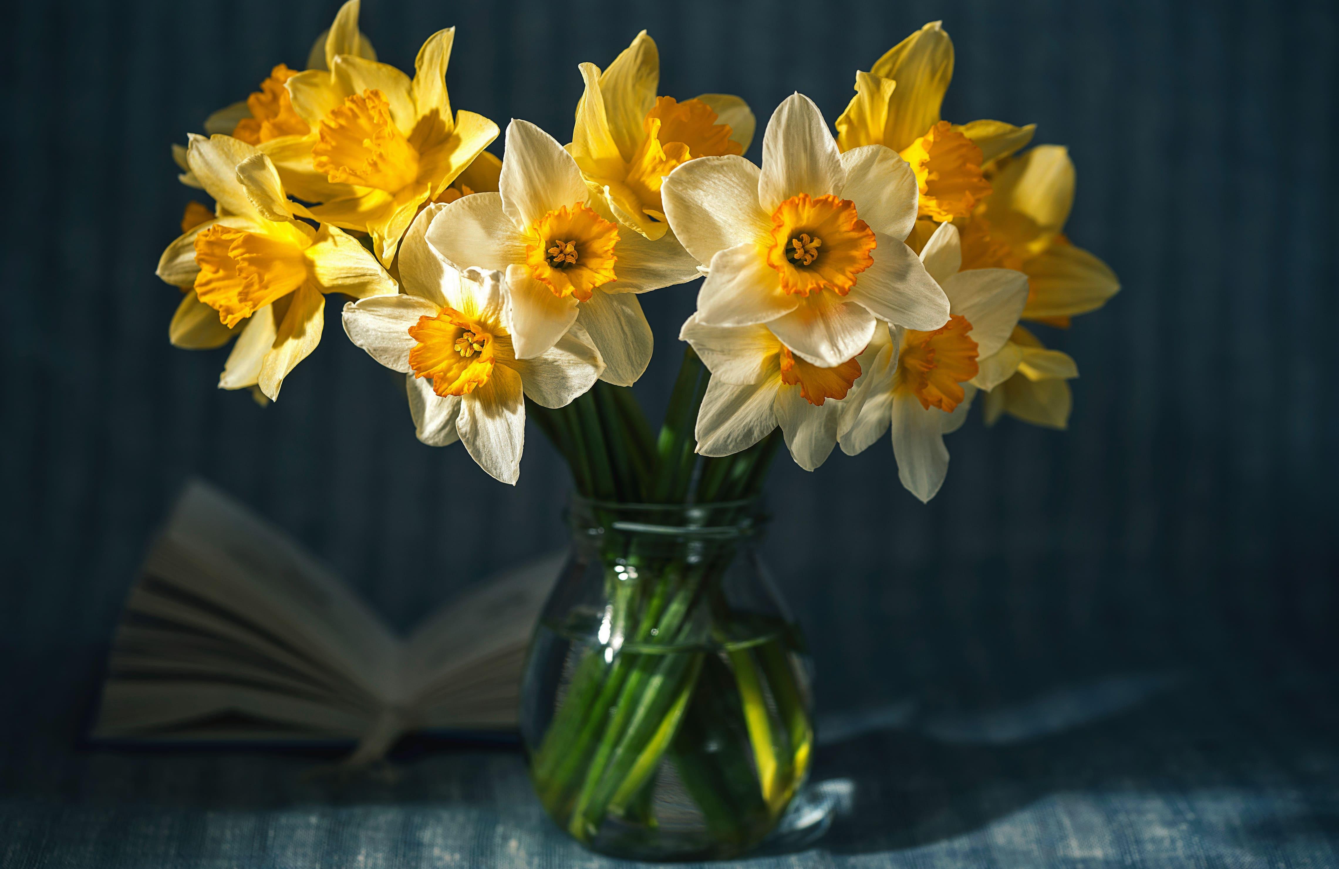 daffodils-photo-31