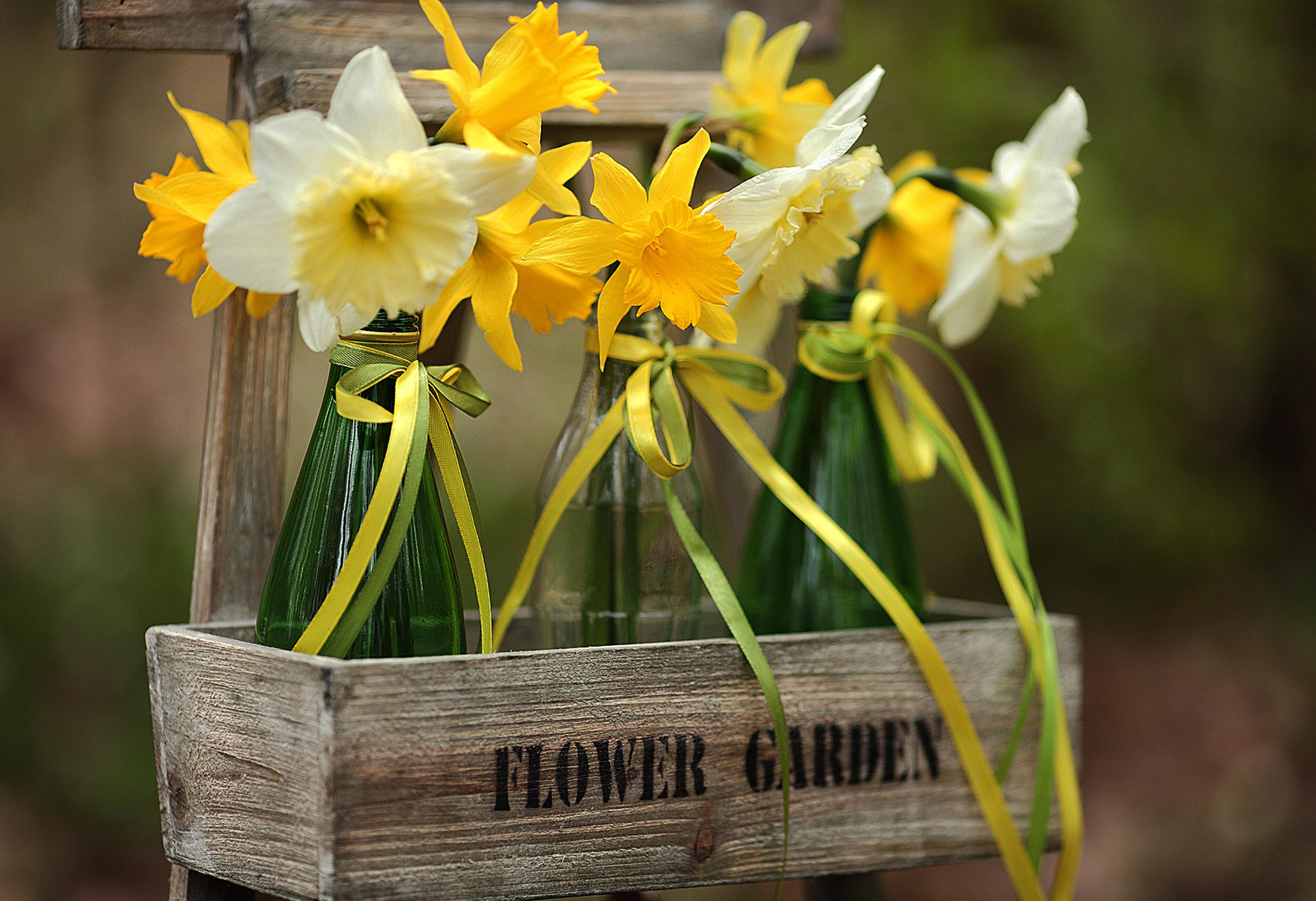 daffodils-photo-32