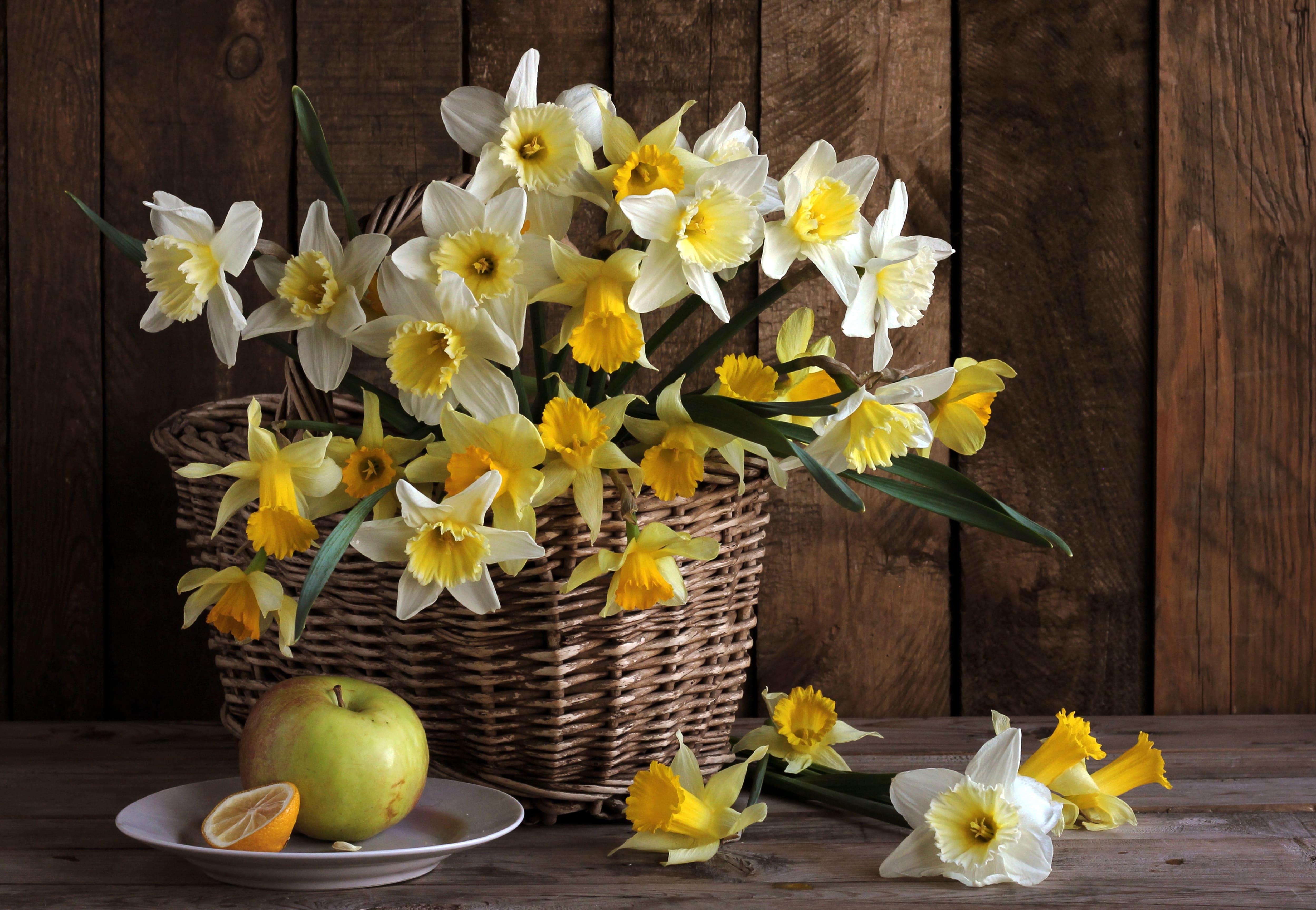 daffodils-photo-33