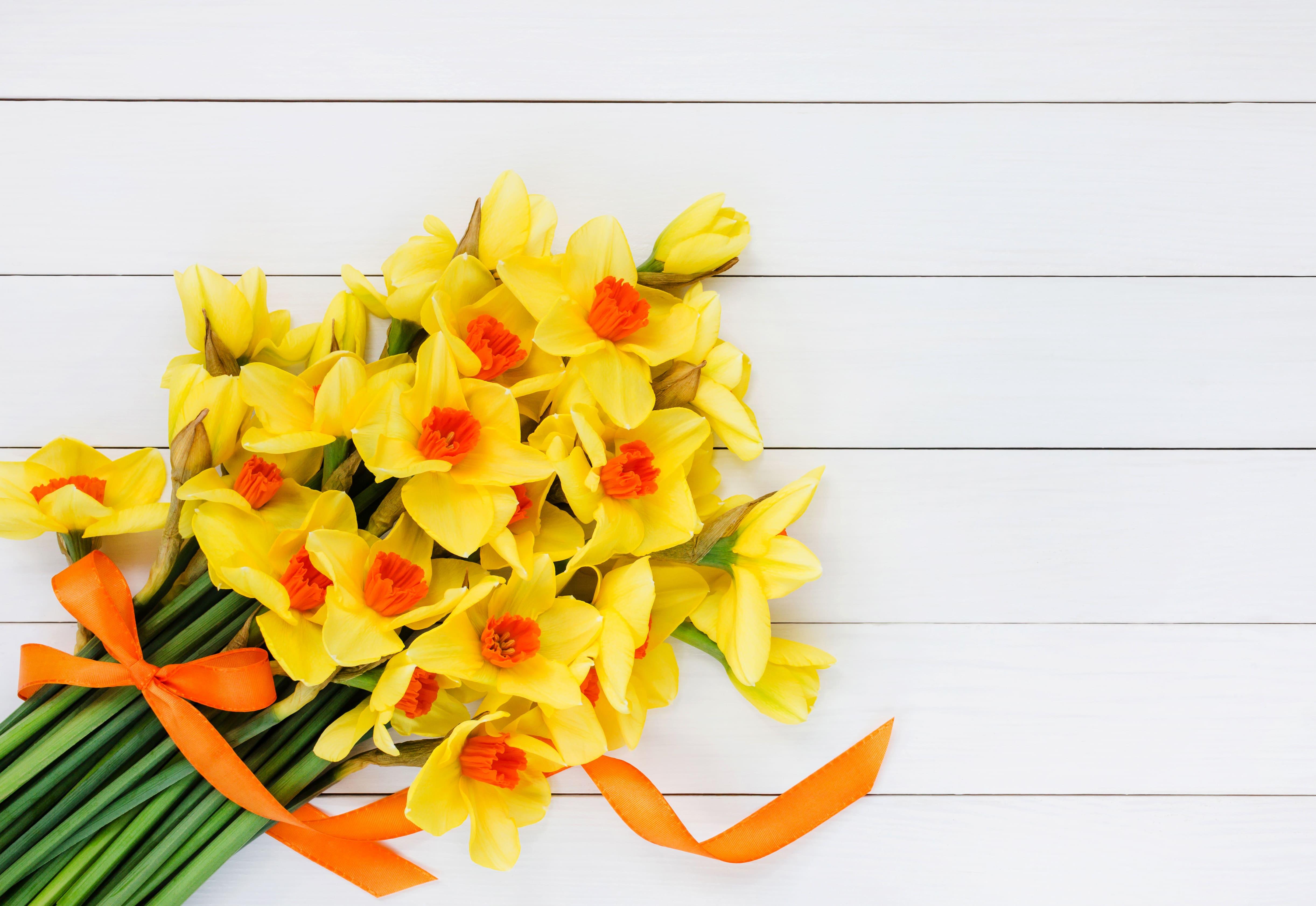 daffodils-photo-36