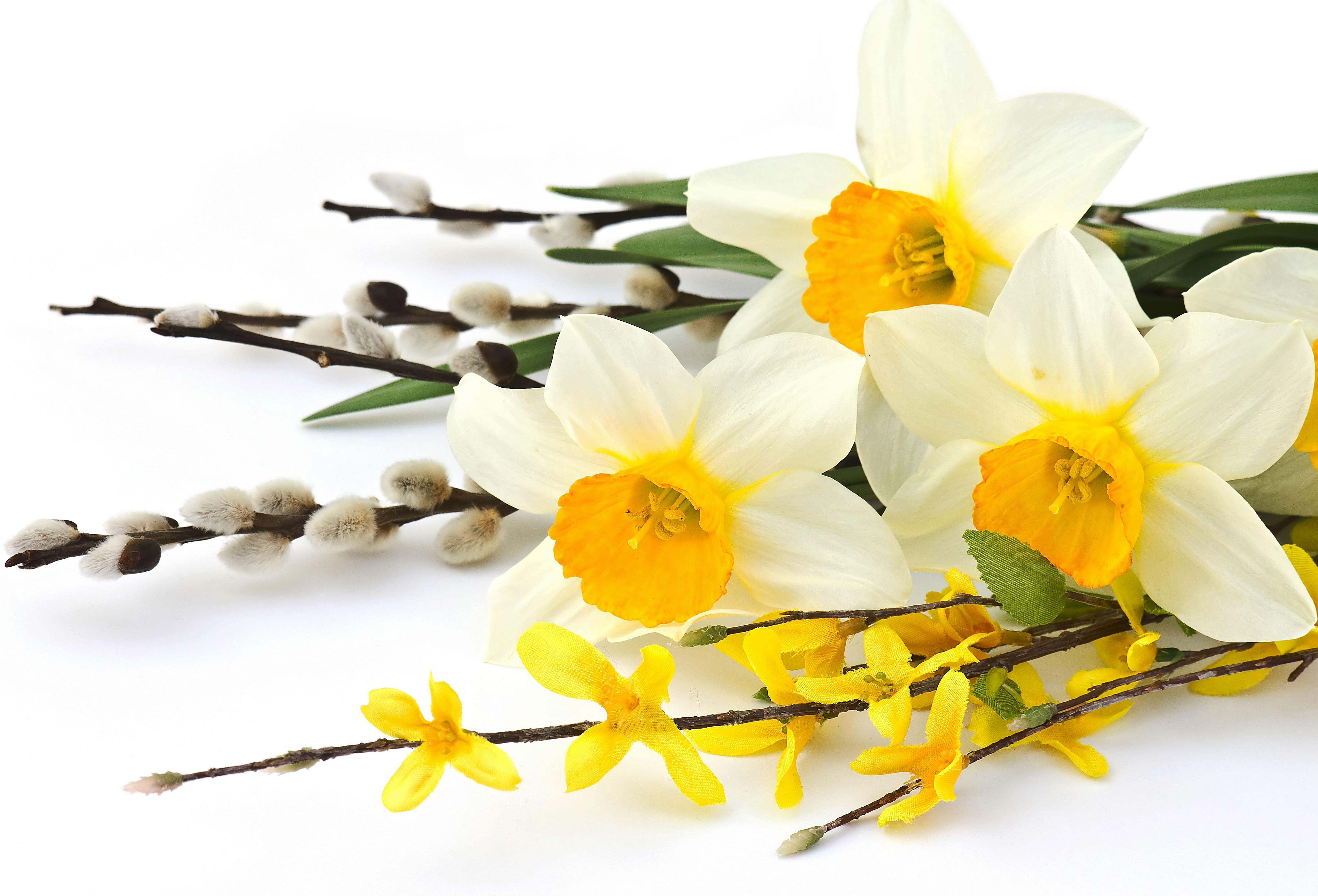 daffodils-photo-37