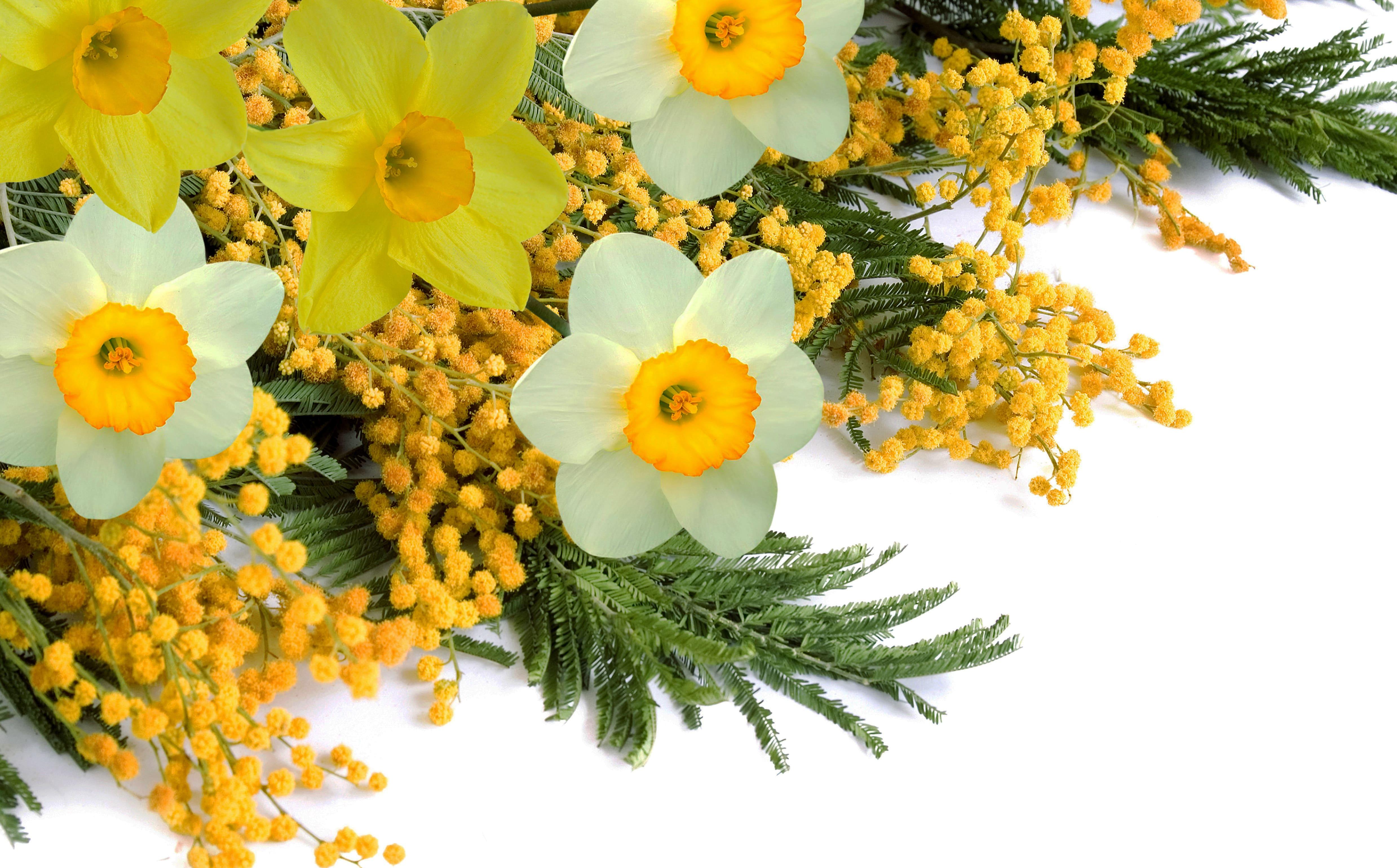 daffodils-photo-65