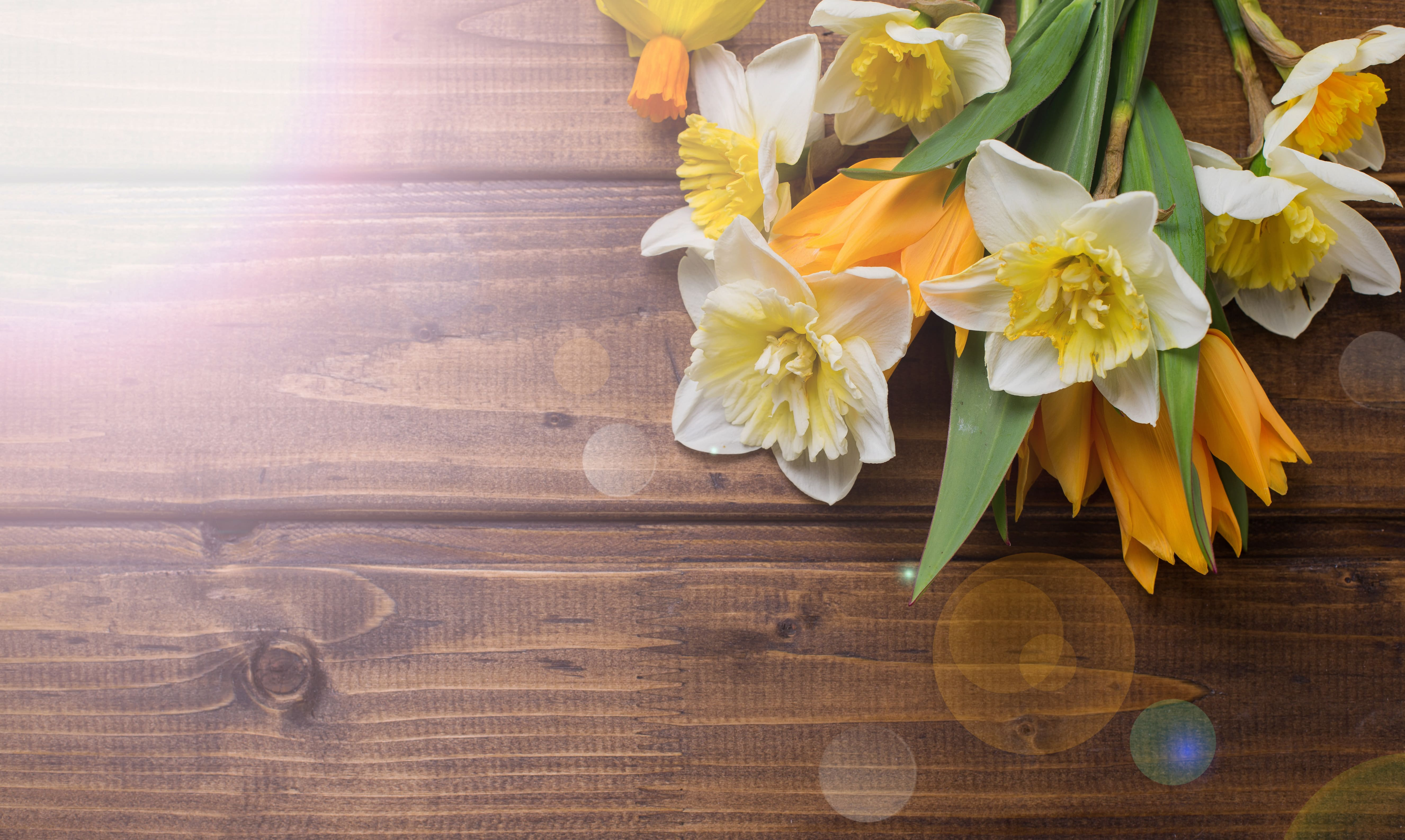daffodils-photo-73