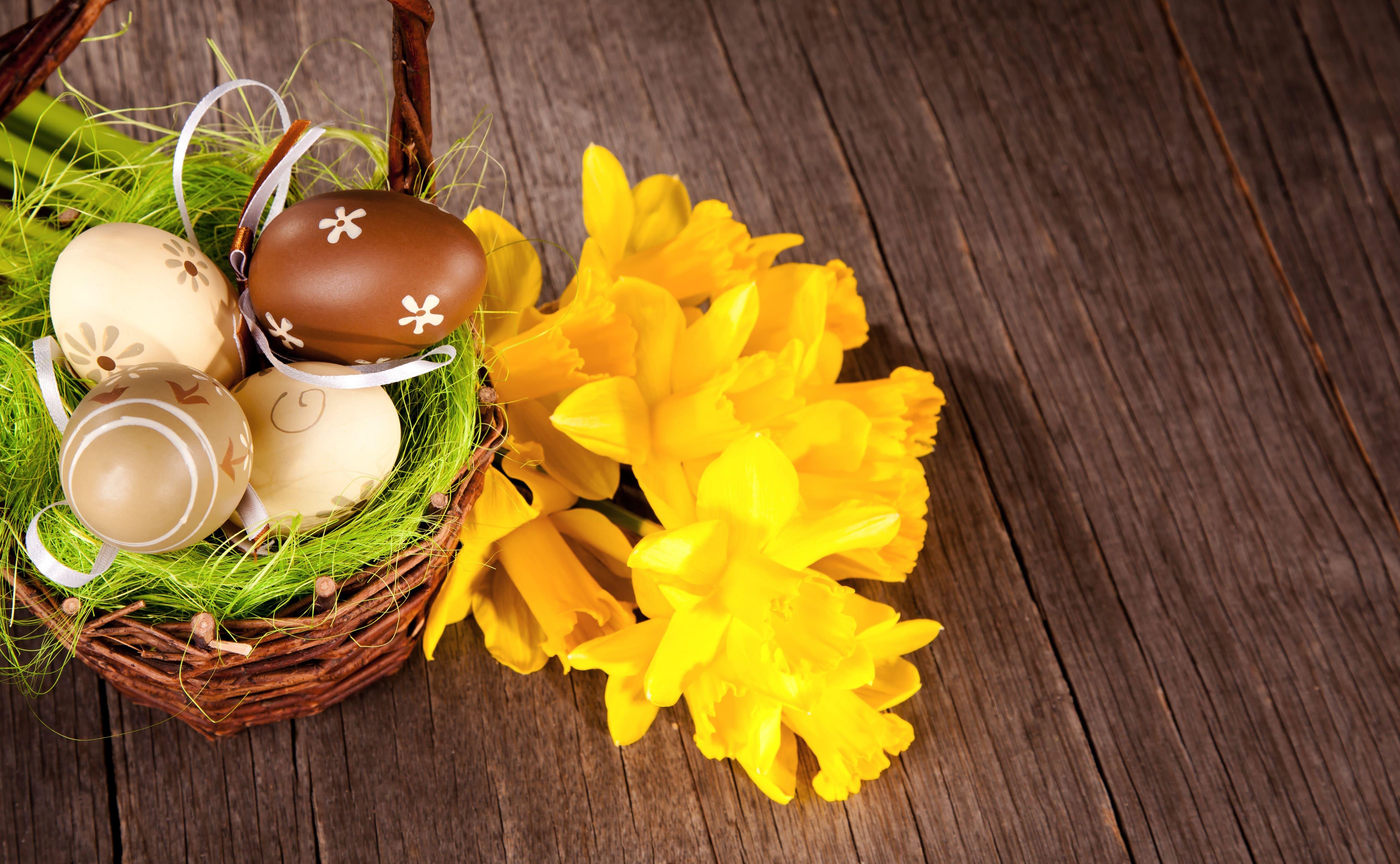 daffodils-photo-81