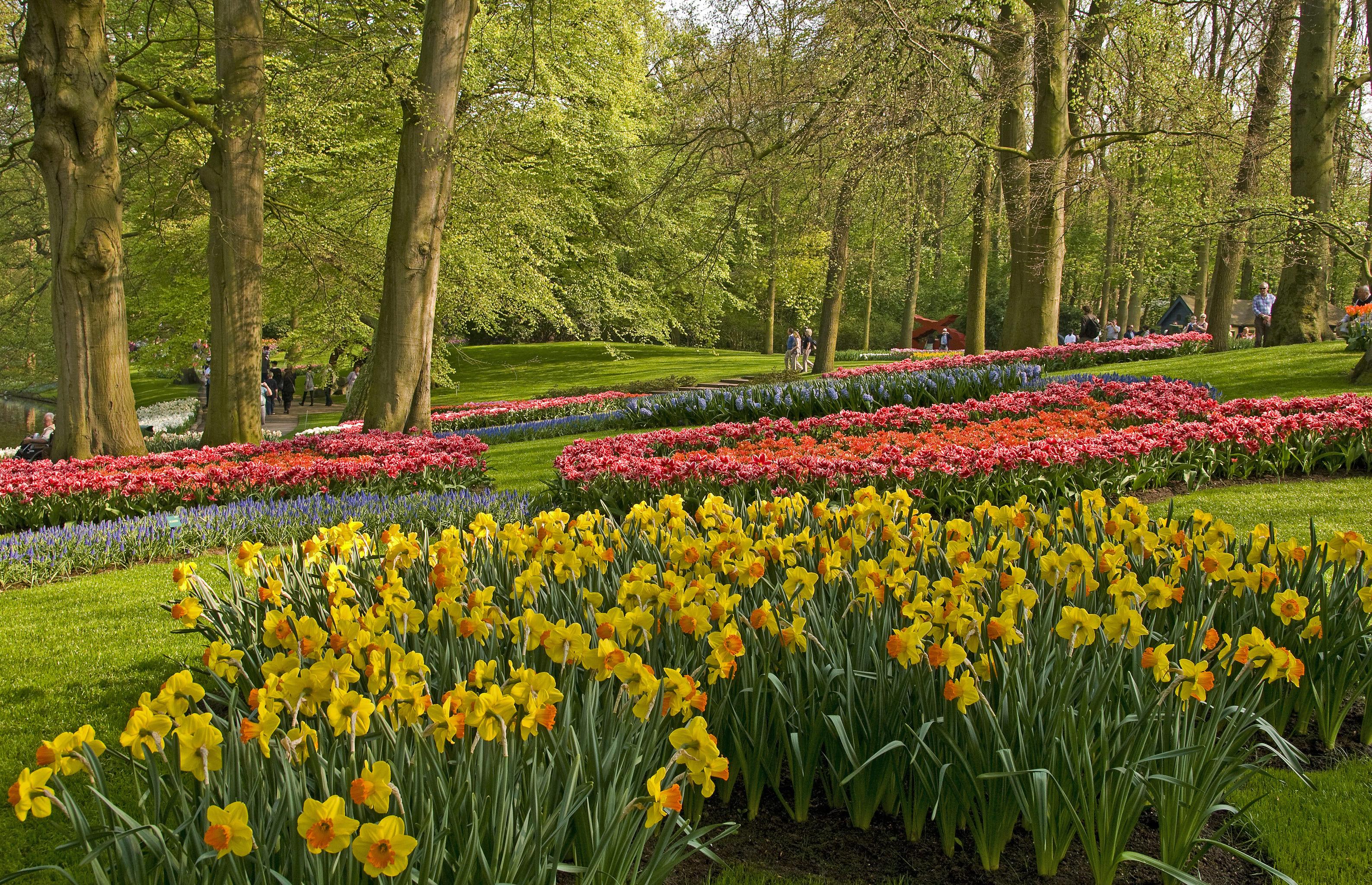 daffodils-photo-92