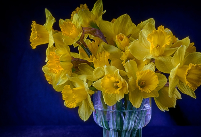Hermosas imágenes de narcisos - 100 fotos de alta resolución