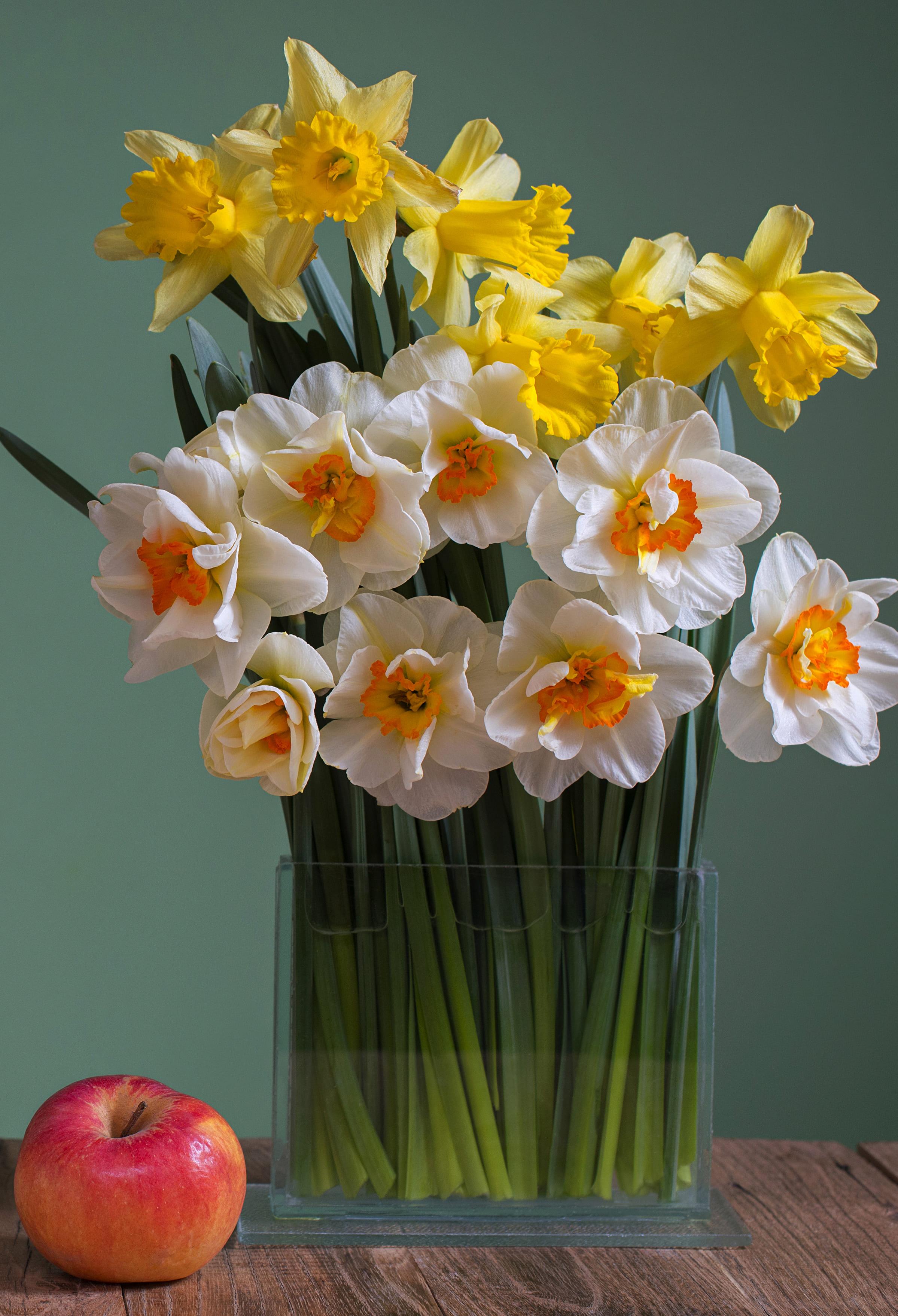 daffodils-photo-98