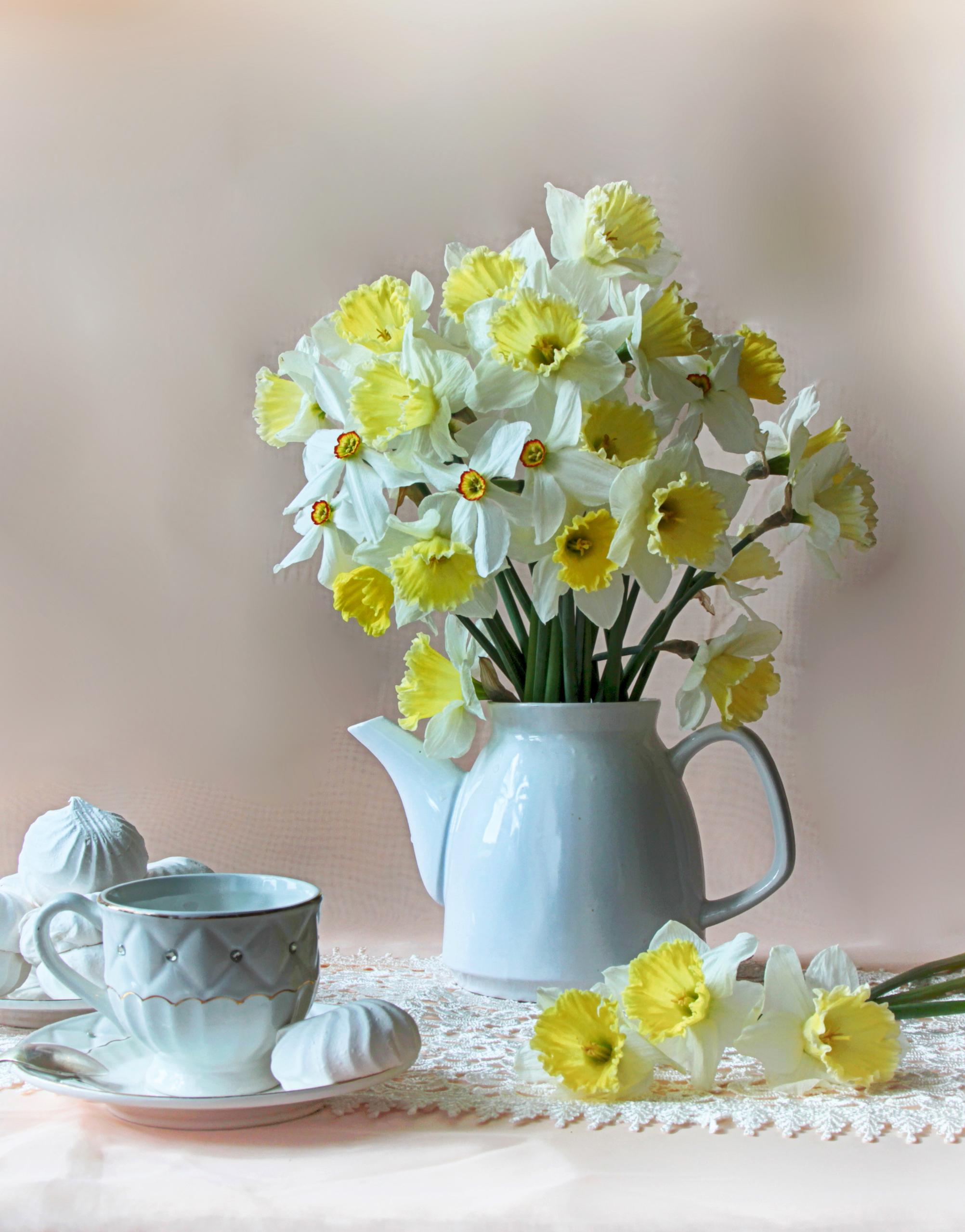 daffodils-photo-99