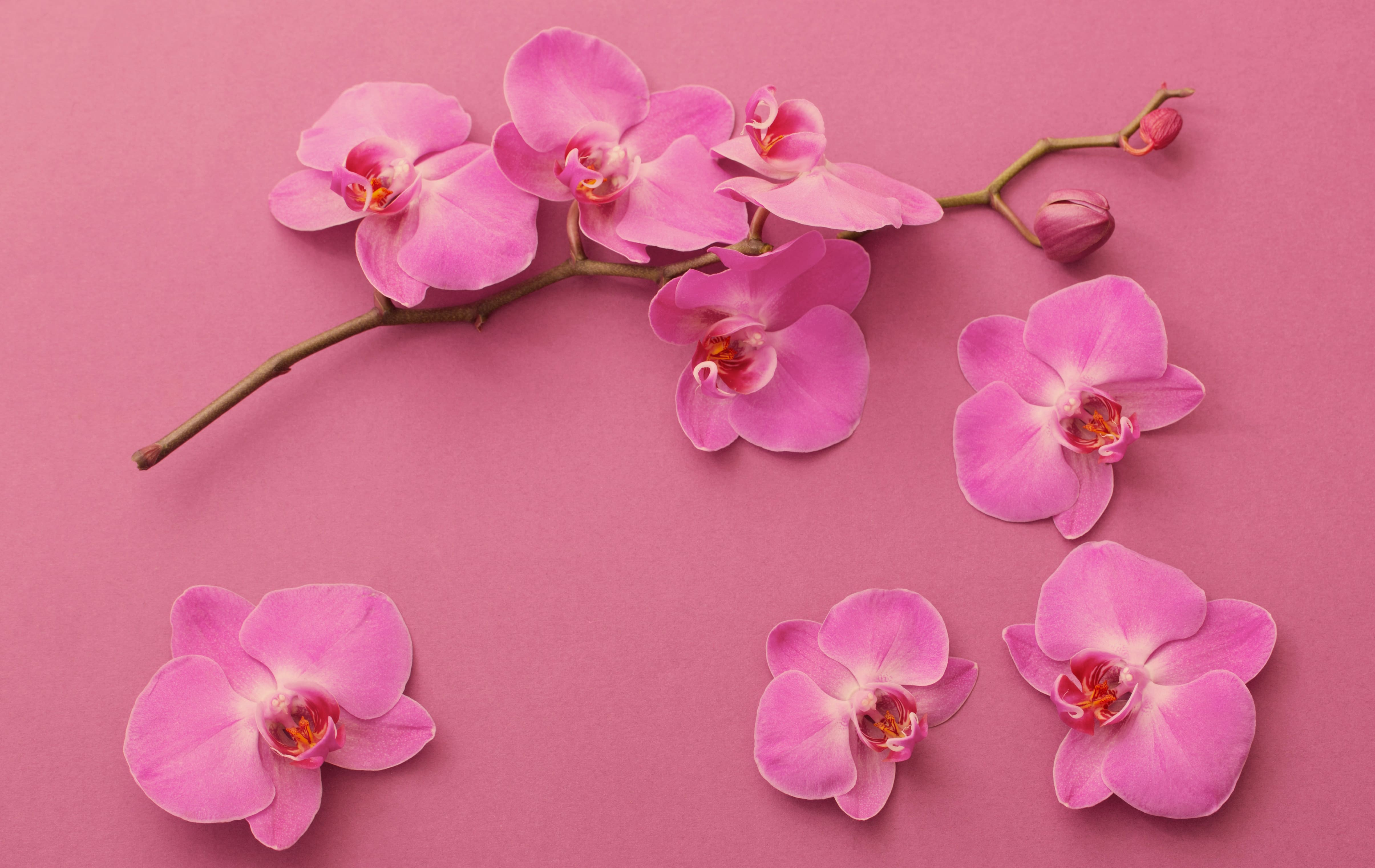 orchid-15